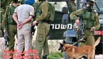 فروانة:الاحتلال اعتقل ( 266300 ) مواطناً من قطاع غزة منذ العام 1967